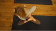Yoga Ananda