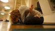 Yoga Ananda 2013